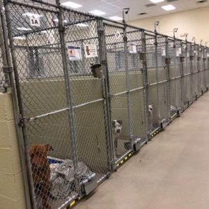 Humane Society of Vero Beach and Indian River County kennels