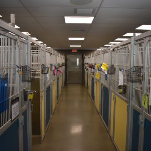 Canine Review: AWLA Kennels interior