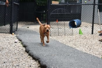 canine-review-animal-welfare-league-arlington-dog-carrying-ball