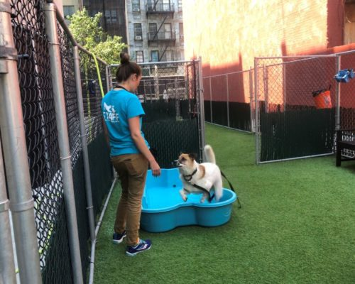 NYC Animal Care Center (NYCACC)