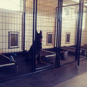 The indoor kennels at RiverRock have high ceilings, easy access to a large fenced yard?, and are flooded with natural light. Photo by Karin Winegar