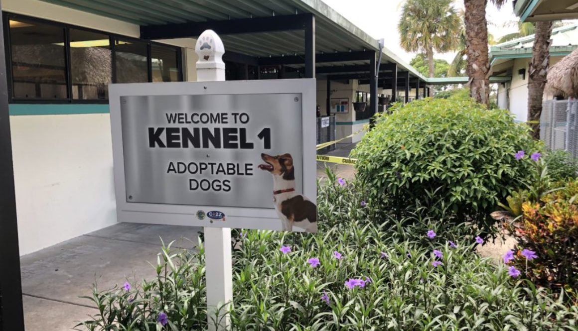 canine-review-kennels-palm-beach-acc-ext