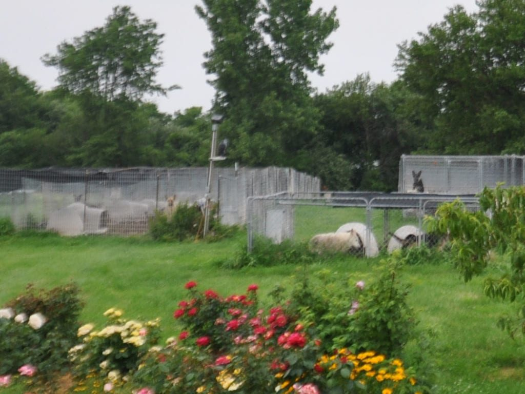 canine-review-raebark-kennel-conditions