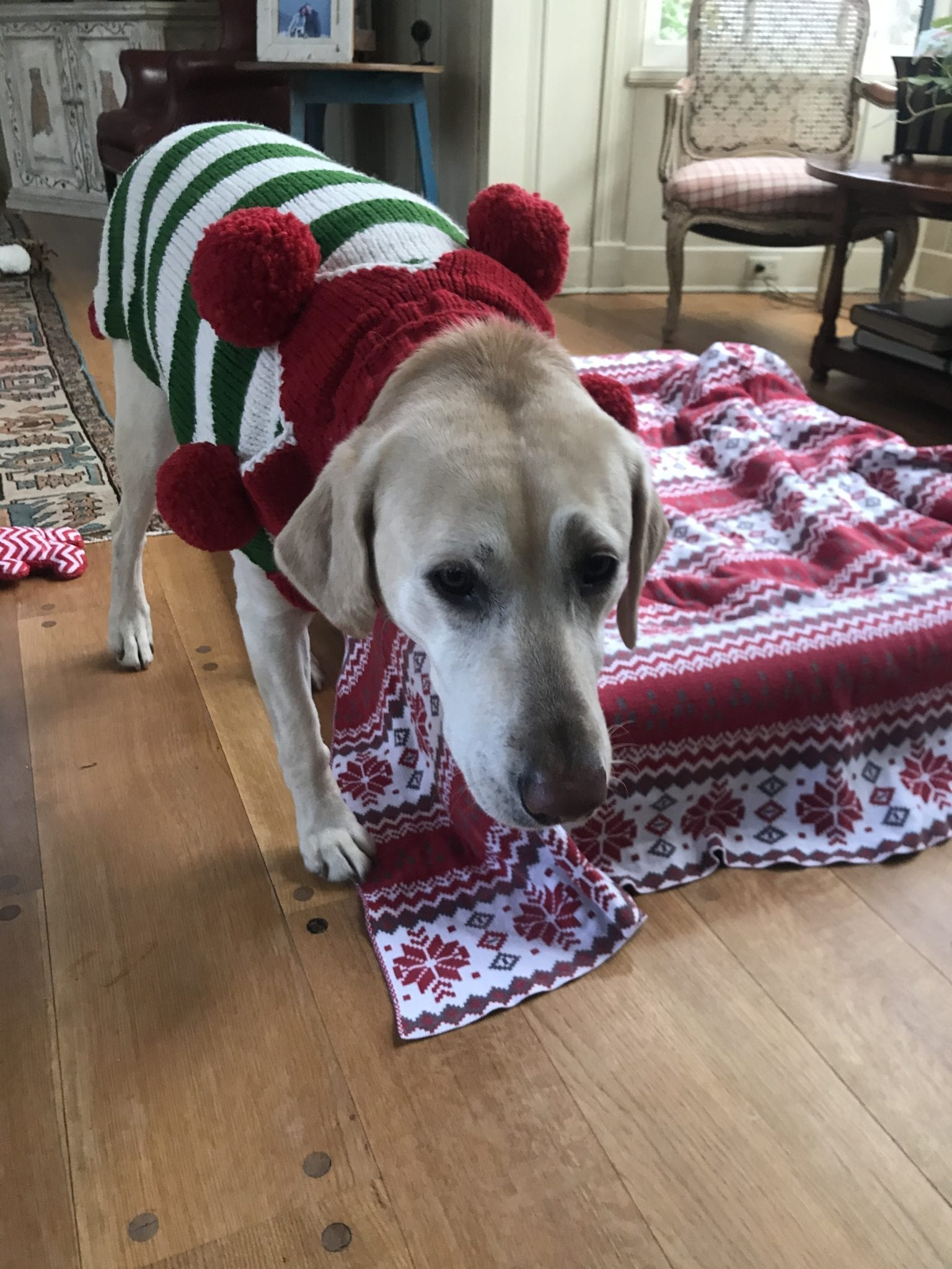nellie-elf sweater-2019