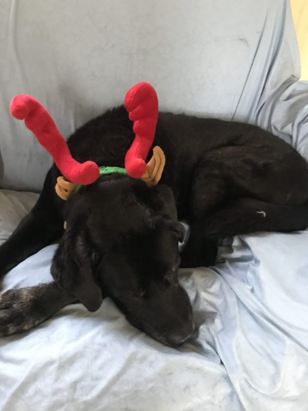 rocky-antlers-2019