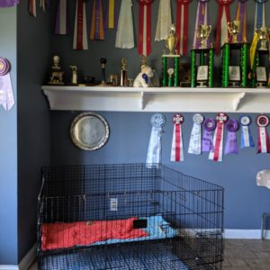 Exact Classic awards room with puppy pen
