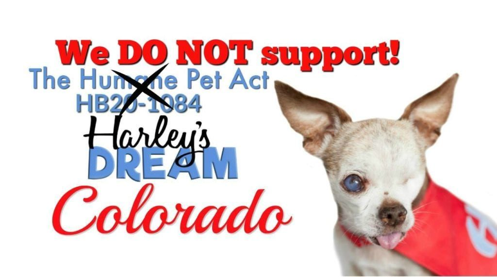 Harley's Dream social media, following the pet store ban's removal.