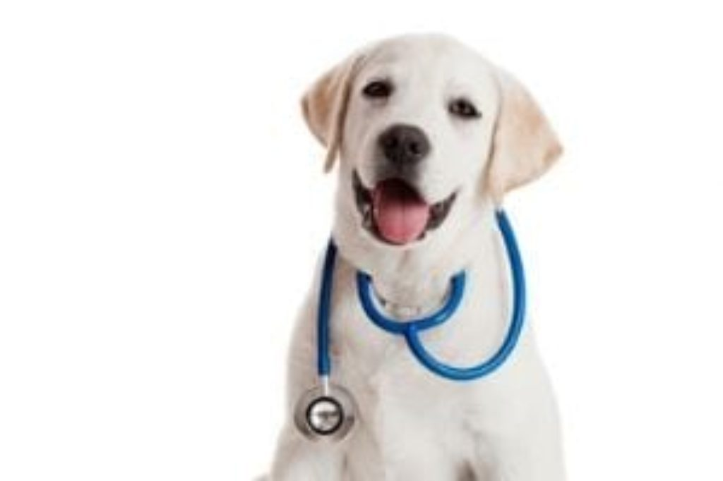 dog stethoscope