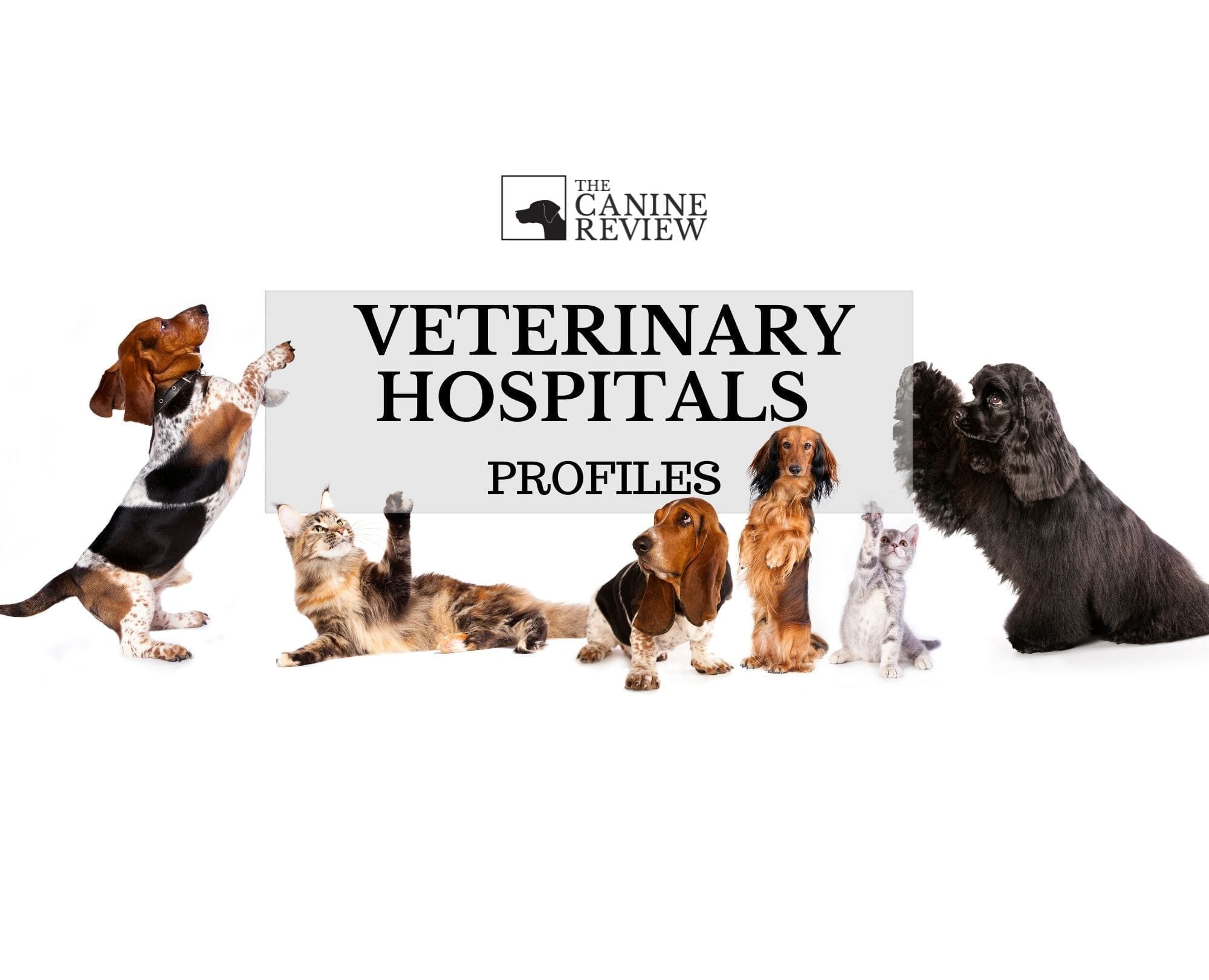 Click to View Exclusive Recent Vet Hospital Profiles