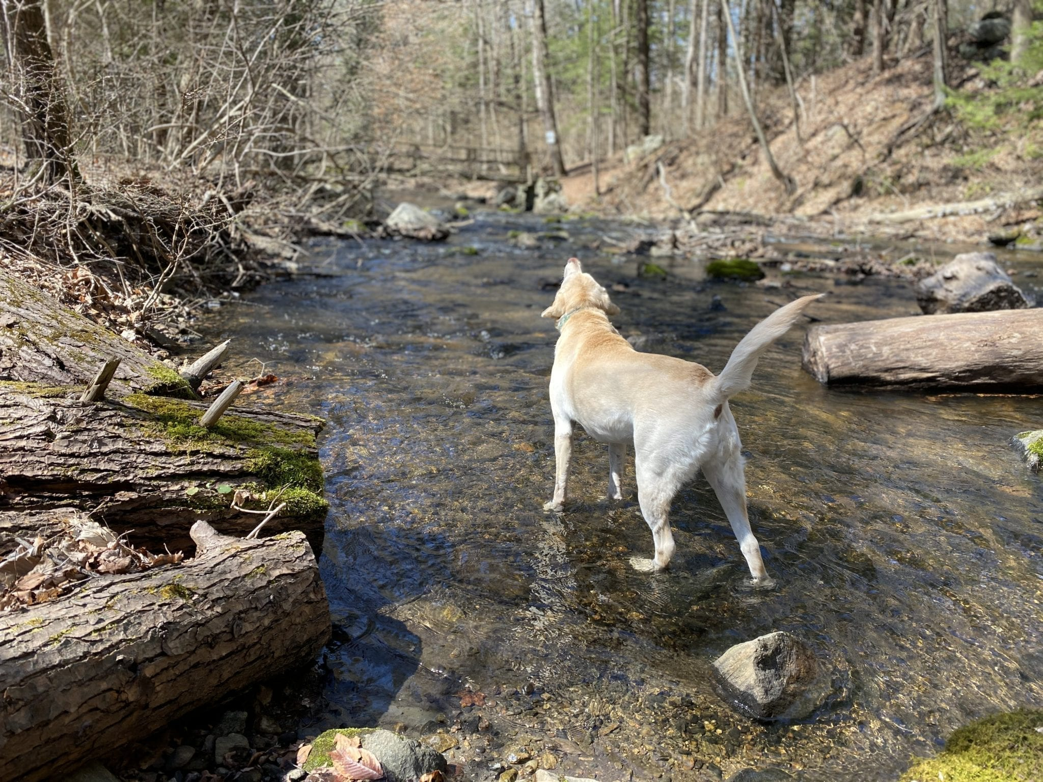 canine-review-nellie-hike-quarantinehike