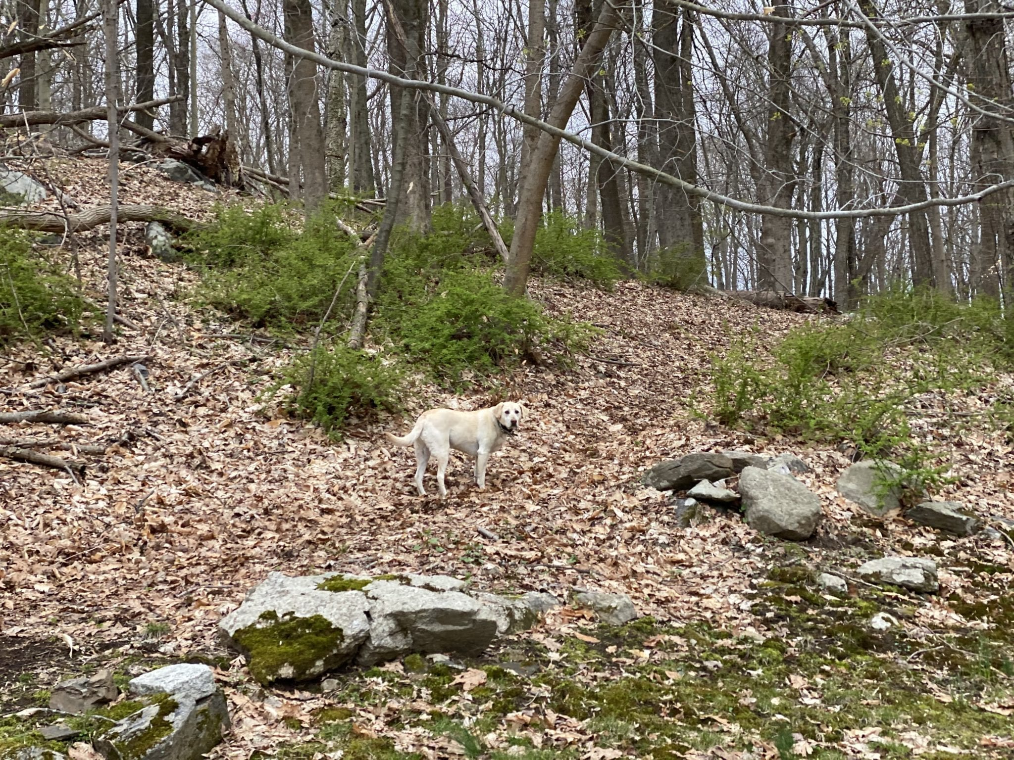 canine-review-nellie-hike-quarantinehike4