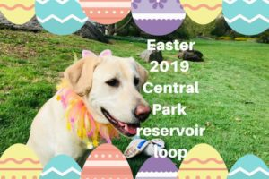 canine-review-easter2019b