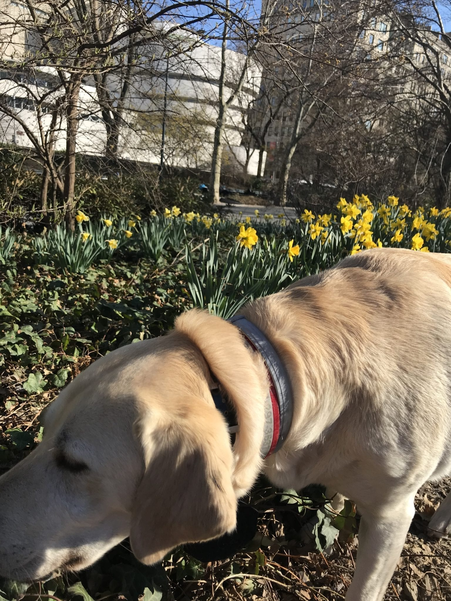 canine-review-nell-centralpark-april2019 guggenheim