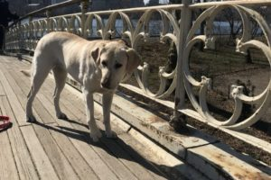 canine-review-nell-centralpark-april2019.2