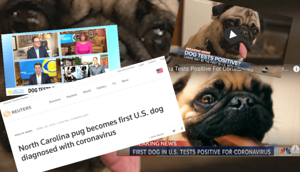 News Media Run False COVID-19 Dog Story, Refuse To Correct It
