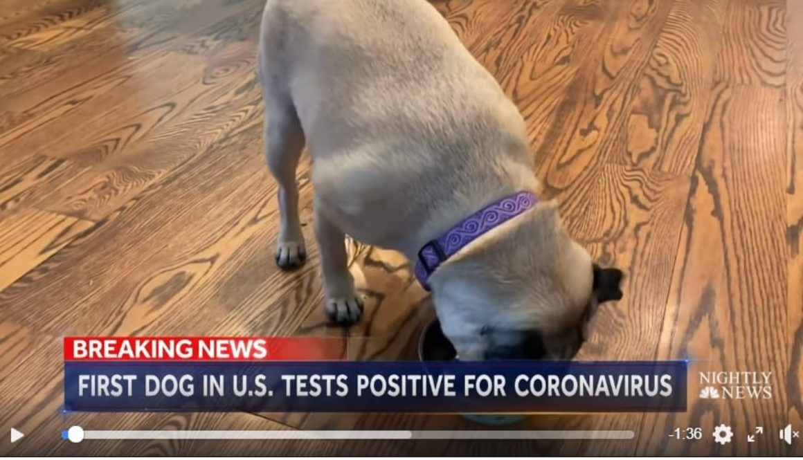nbc nightly news lester holt dog positive virus2