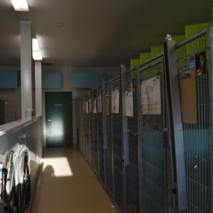 more of the adoptable kennels