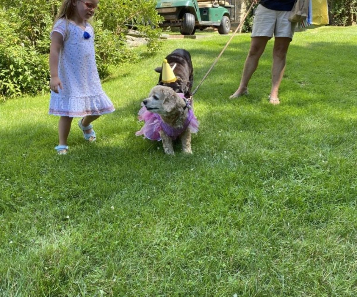 dog birthday party july 2020 lulu arrival