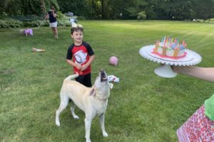 dog birthday party july 2020 nellie barking at cake