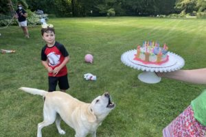 dog birthday party july 2020 nellie barking at cake liam