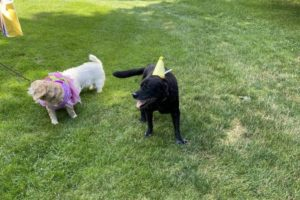 dog birthday party july 2020 rocky and lulu