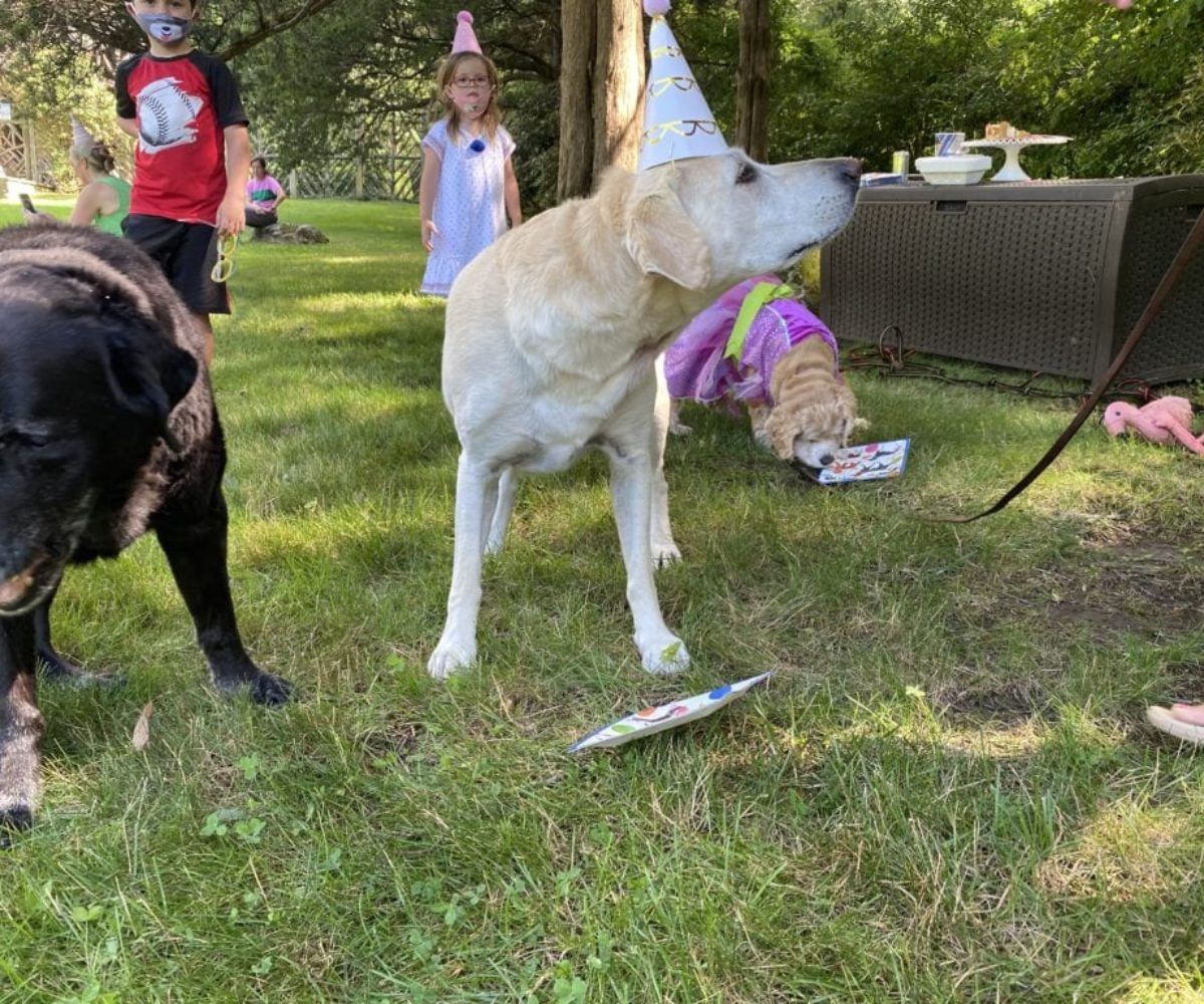 dog birthday party july 2020 rocky is milton