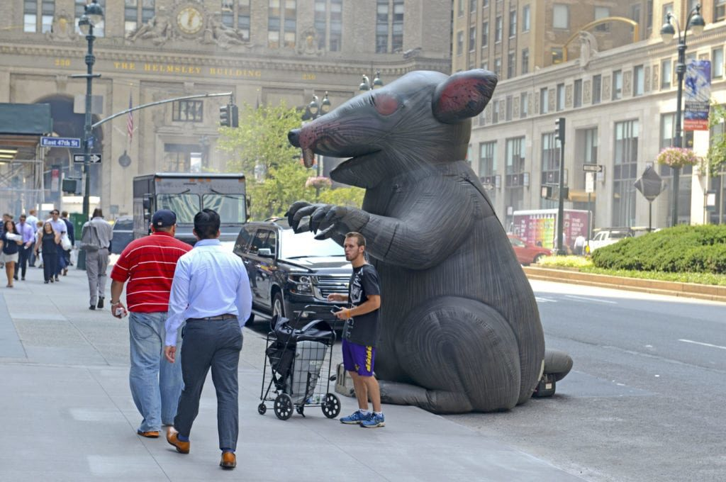 rat nyc park ave
