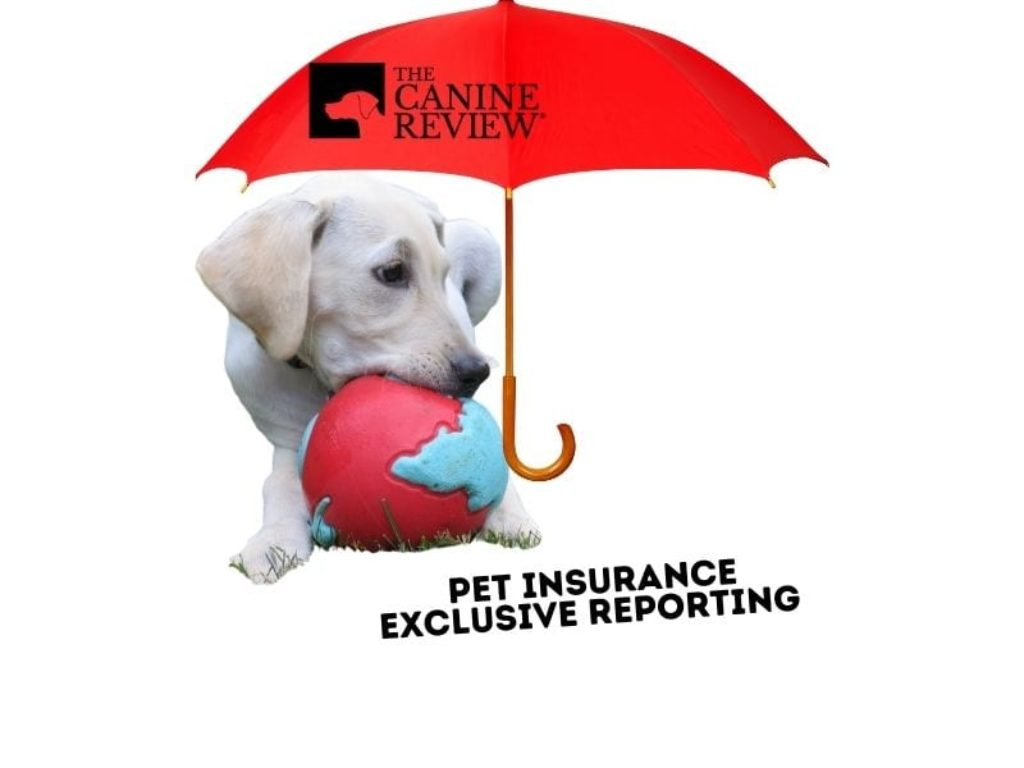 feature insurance n red umbrella