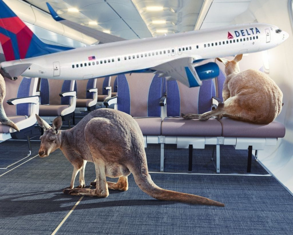 flying kangaroos
