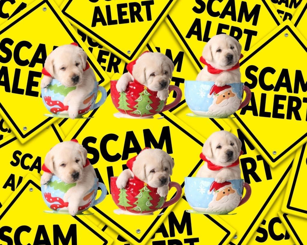 pandemic puppy scam