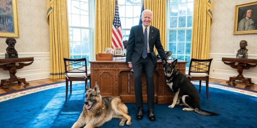 Dogs in Oval
