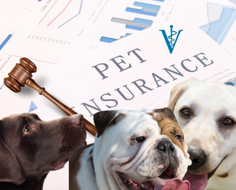 Special Report: As America's pet insurance industry goes mainstream, do the companies insure themselves or you?