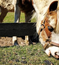 13 Hands Equine Rescue